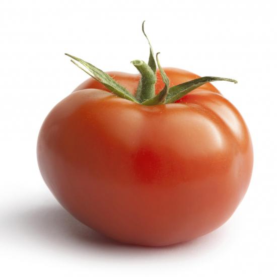 tomaat prince