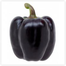 paprika paars